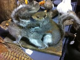 squirrelsscrewing